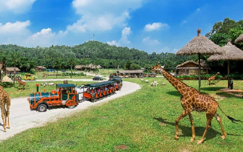 things to do in Guangzhou: Chimelong Zoo