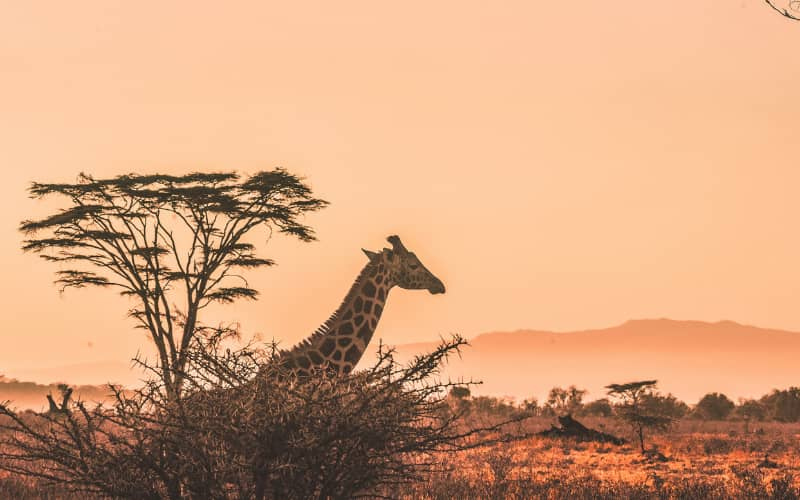 Gap year ideas: safari in africa